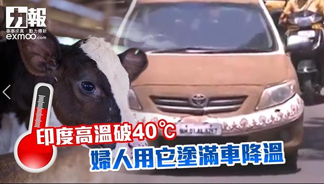 婦人用牛糞鋪滿愛車環保降溫